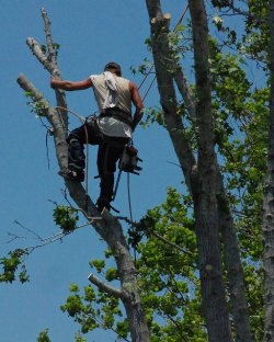 przycinanie drzew warszawa
